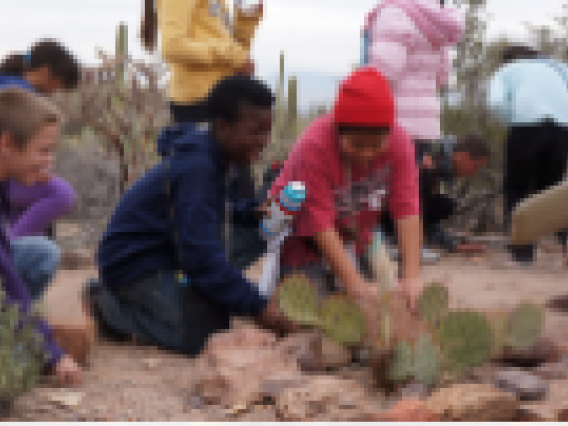 kids planting cactus in the desert